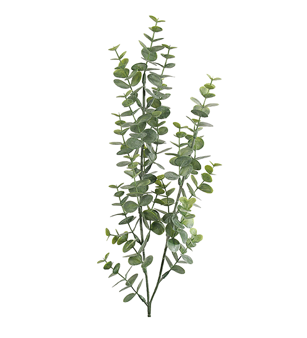 Eukalyptus- flergrenet