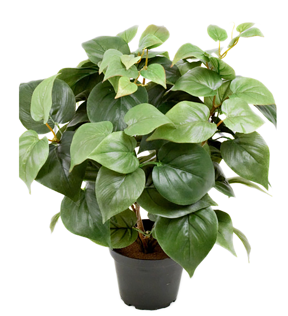 Philodendron 35 cm