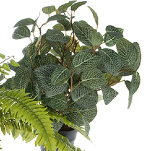 Grønnplante: Ormeskinn