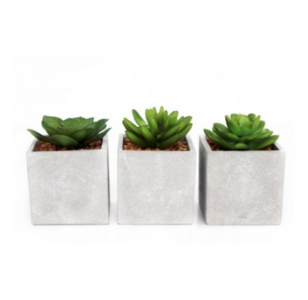 Concrete Potted Succulents - Set of 3