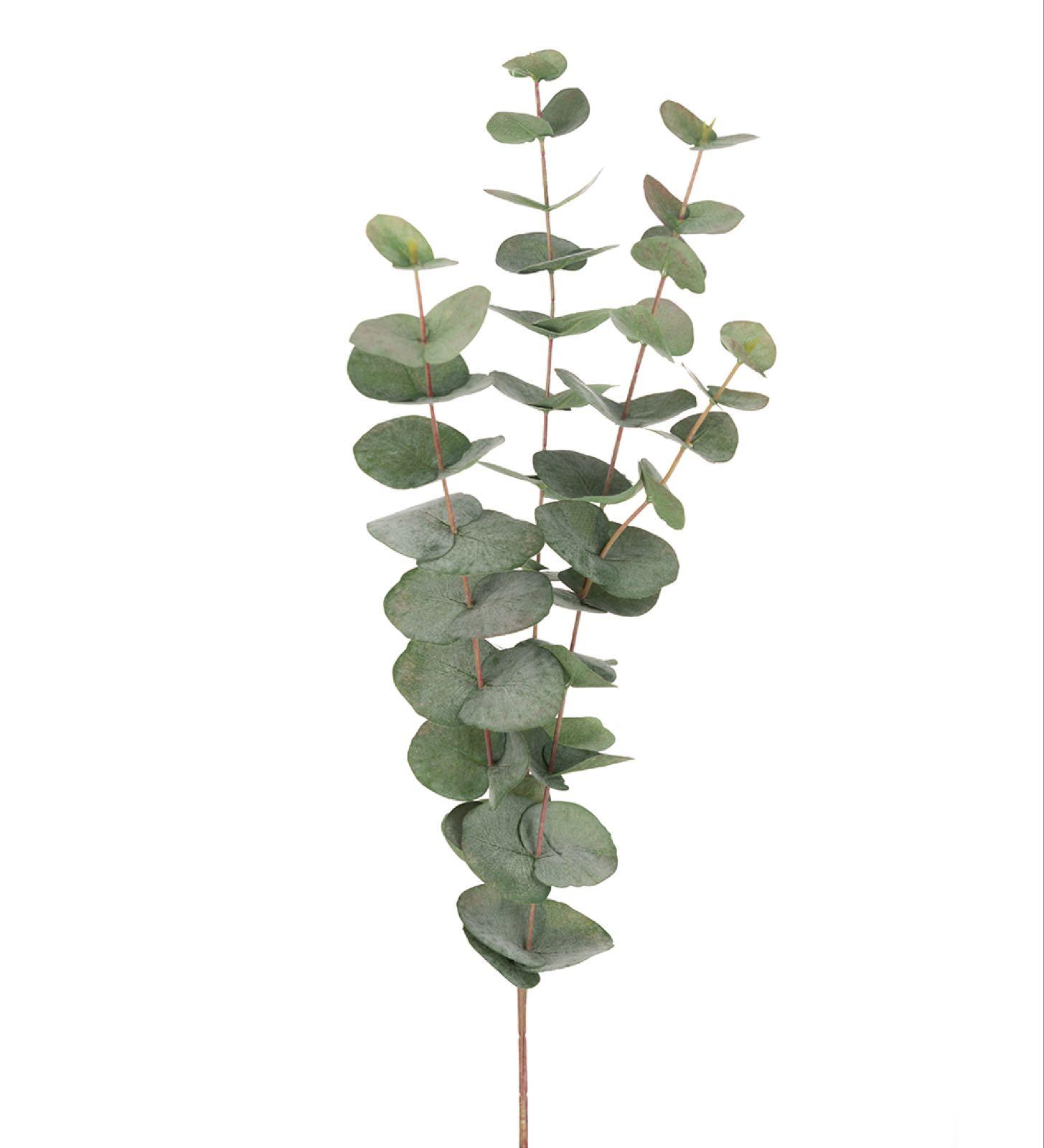 Eukalyptus, 3-grenet