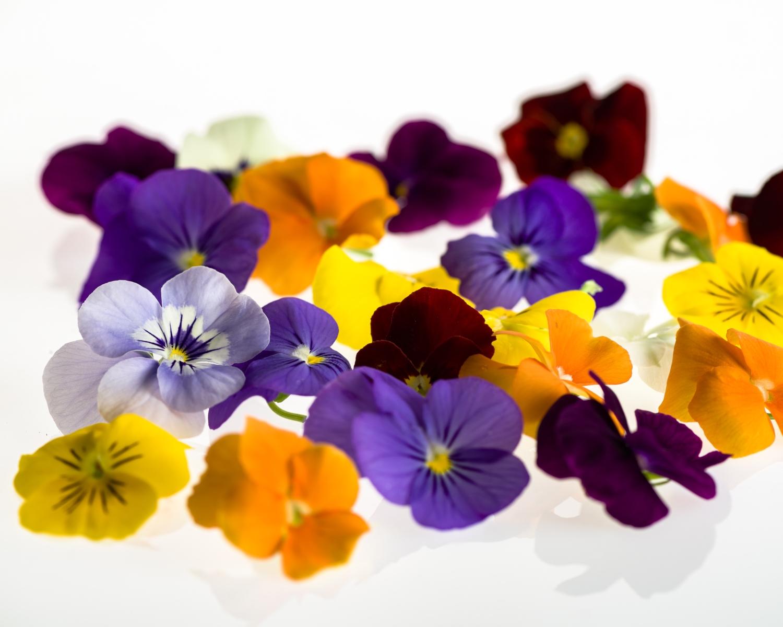 Syötäviä kukkia, orvokki