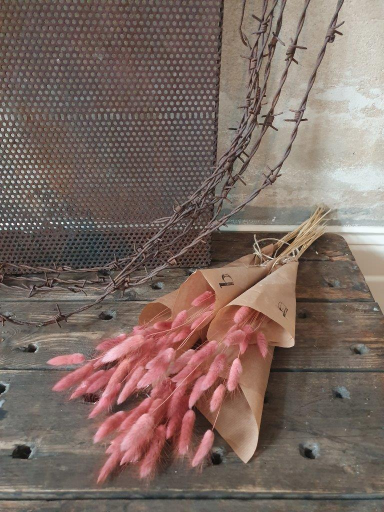 Lagurus (Bunnies) Pink (BU)