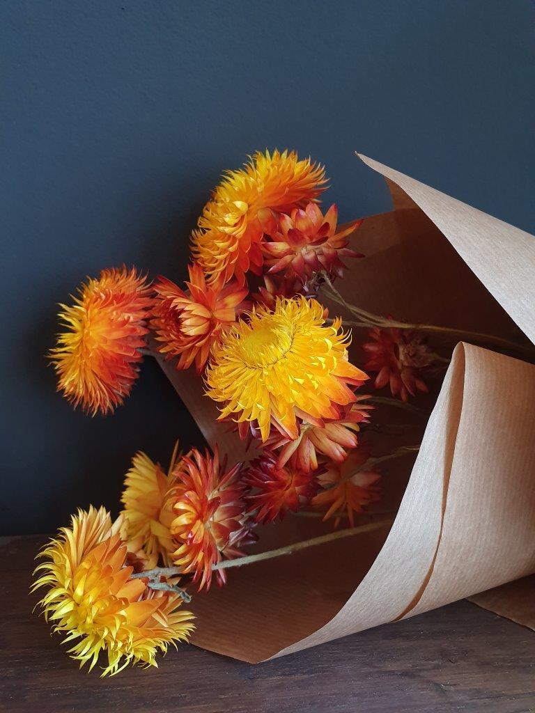 Helichrysum Orange (BU)