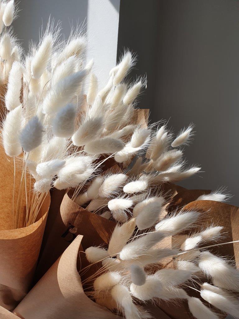 Lagurus (Bunnies) White (BU)