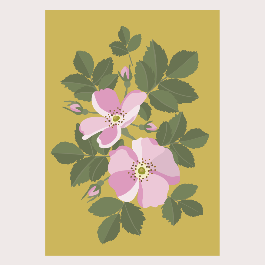Ruusu postikortti
