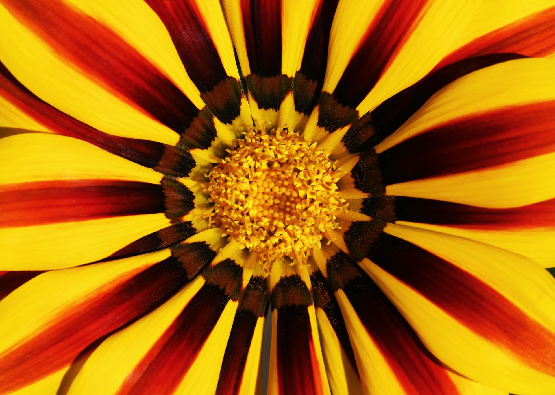BRYANTS NURSERIES LIMITED T/A Online Plants Store