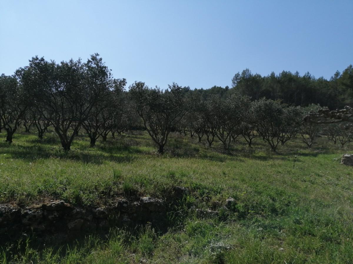 Les Flaveurs du Rocher Cotignac