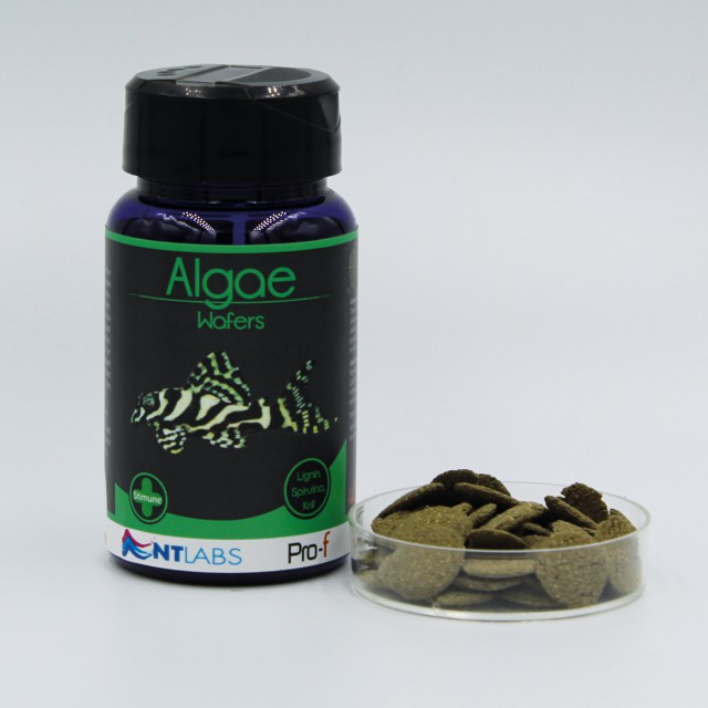 NT Labs Algae Wafer