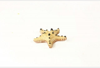 Choc Chip Starfish