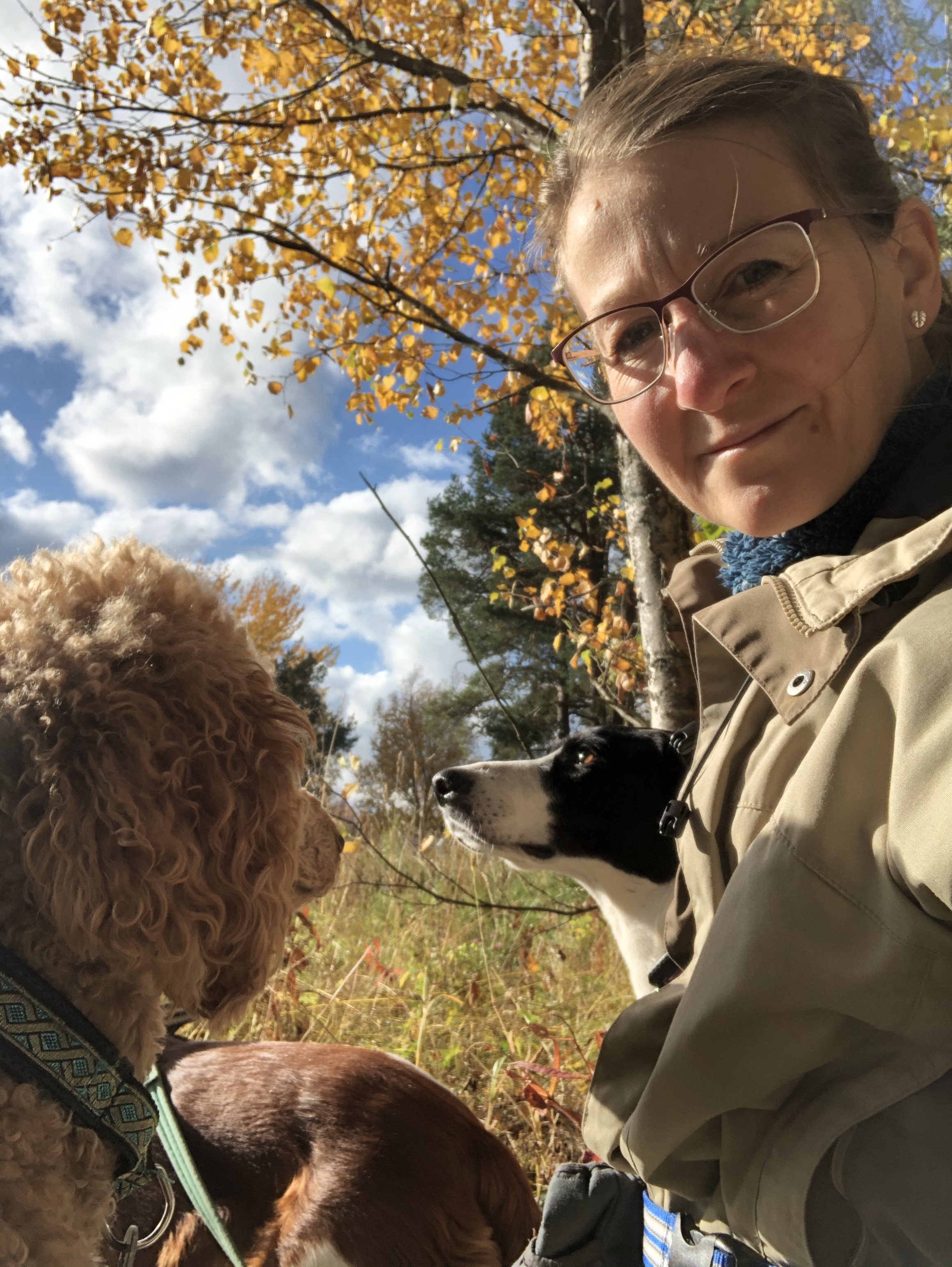Hundtjänster - Hundträning för vardagen