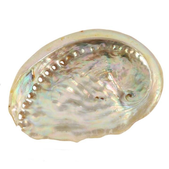 Abalonen kuori n.8cm
