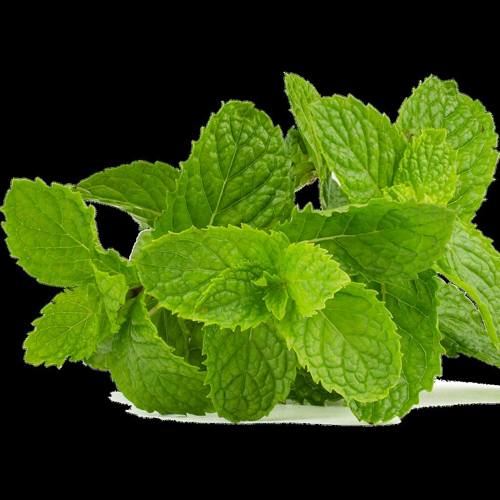 Not available - Mint, Fresh (Organic, UK)