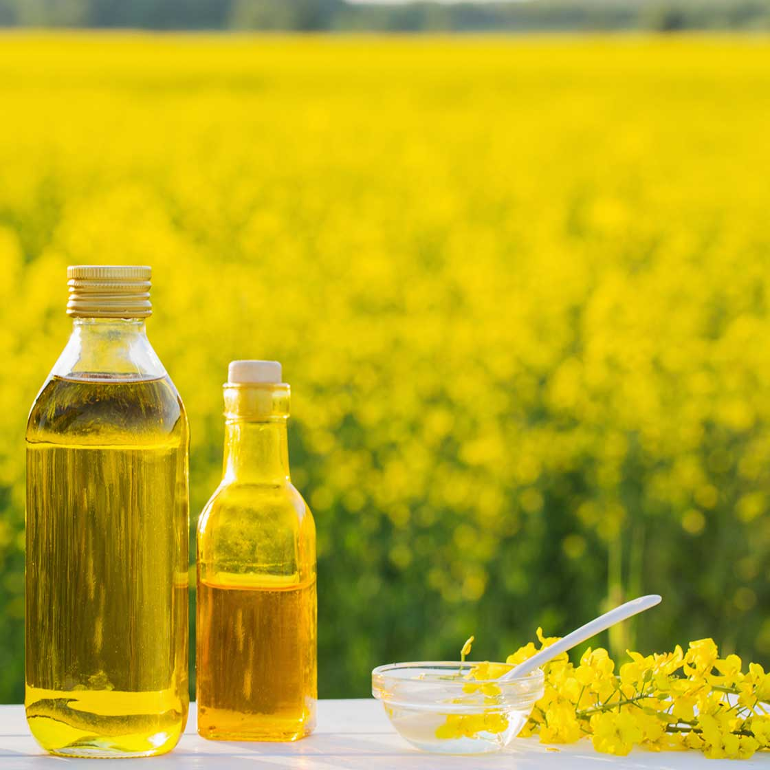 Rapeseed Oil, 500ml (with bottle) - Cotswold Gold