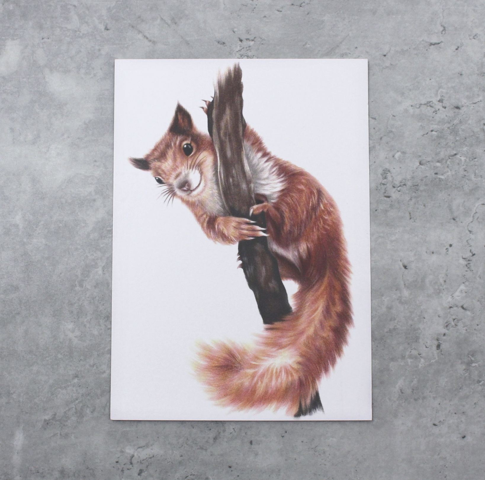 Orava -Postikortti