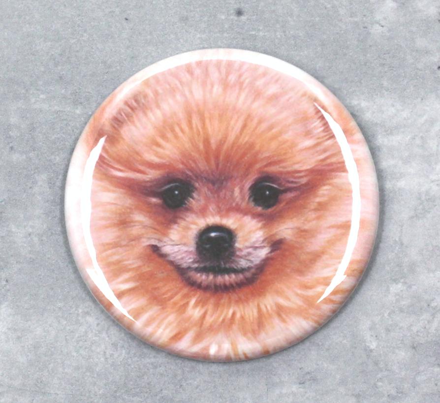 Pomeranian -Nappi (Koirarodut)