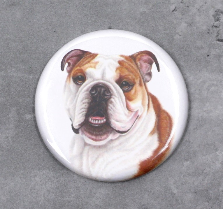 Englannin Bulldog -Nappi (Koirarodut)
