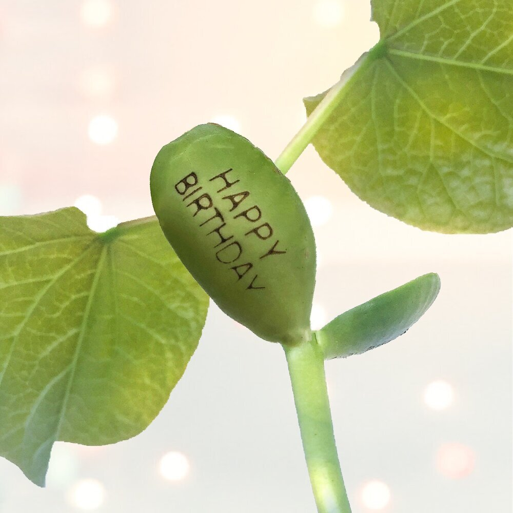 """BEST DAD"" BIRTHDAY CARD WITH A PLANTABLE MAGIC BEAN BEAN"