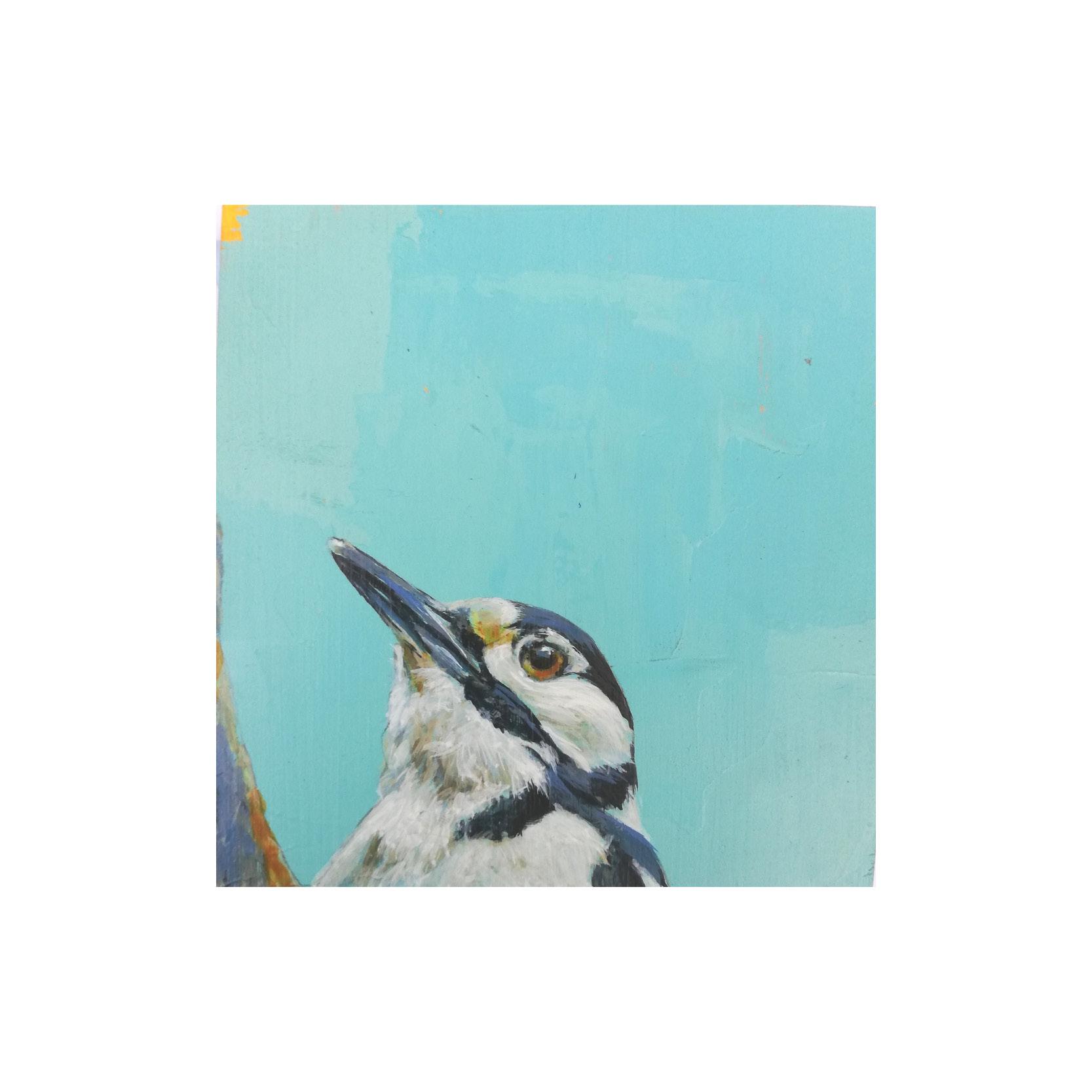 Steve Ferguson - Great Spotted Woodpeckers Head