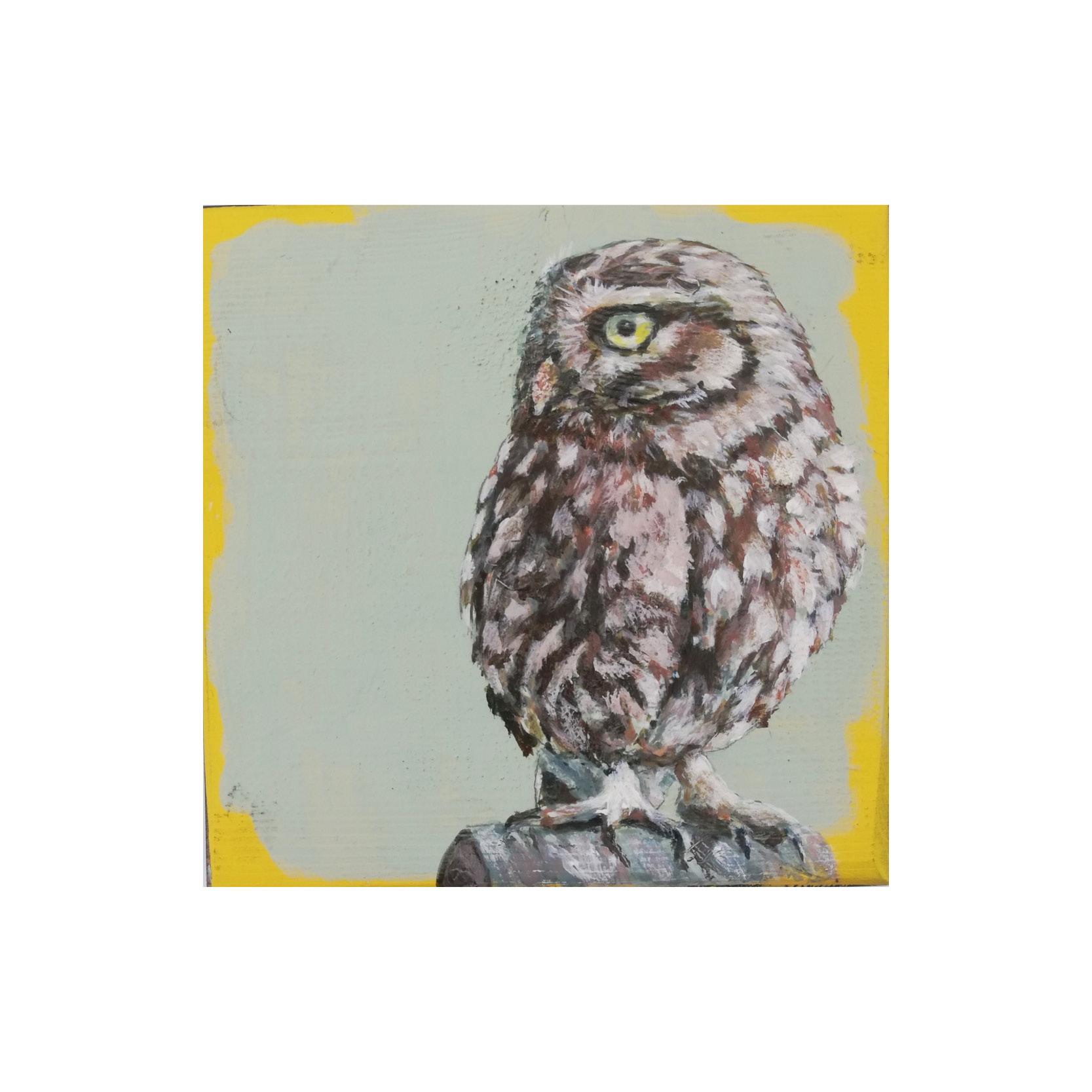 Steve Ferguson - Little Owl on Post