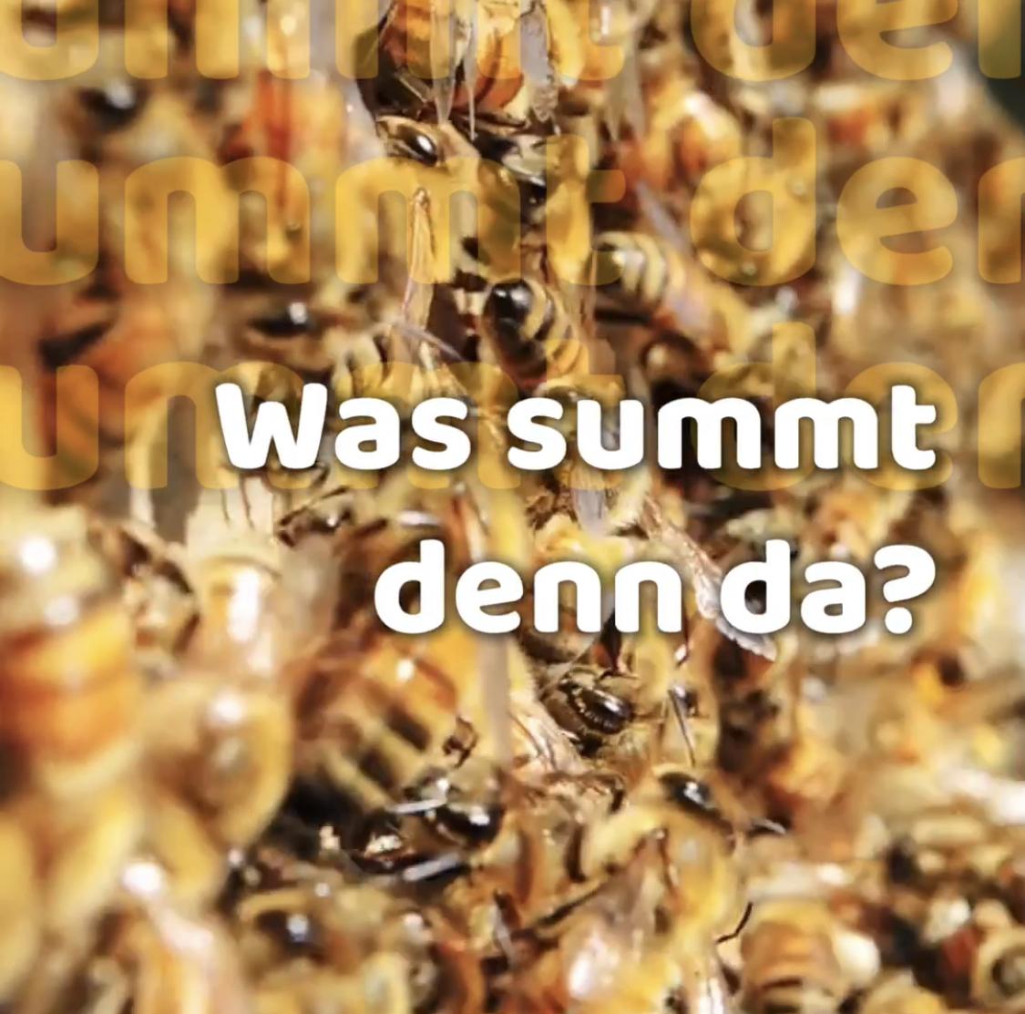 Blick in den Bienenstock, 13.06.2020 14:00 Uhr