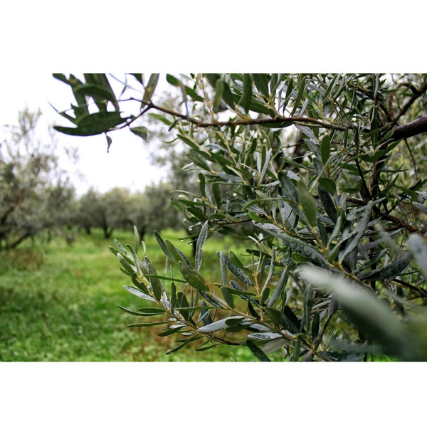 """Olivolja """"Första skörd"""" 700g"""