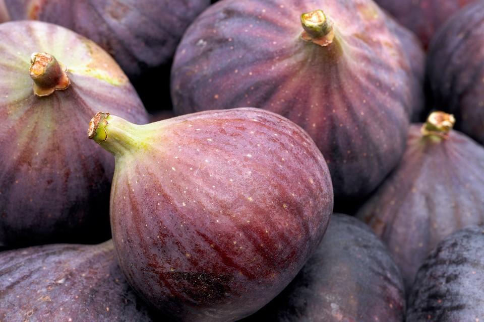 Single Fig