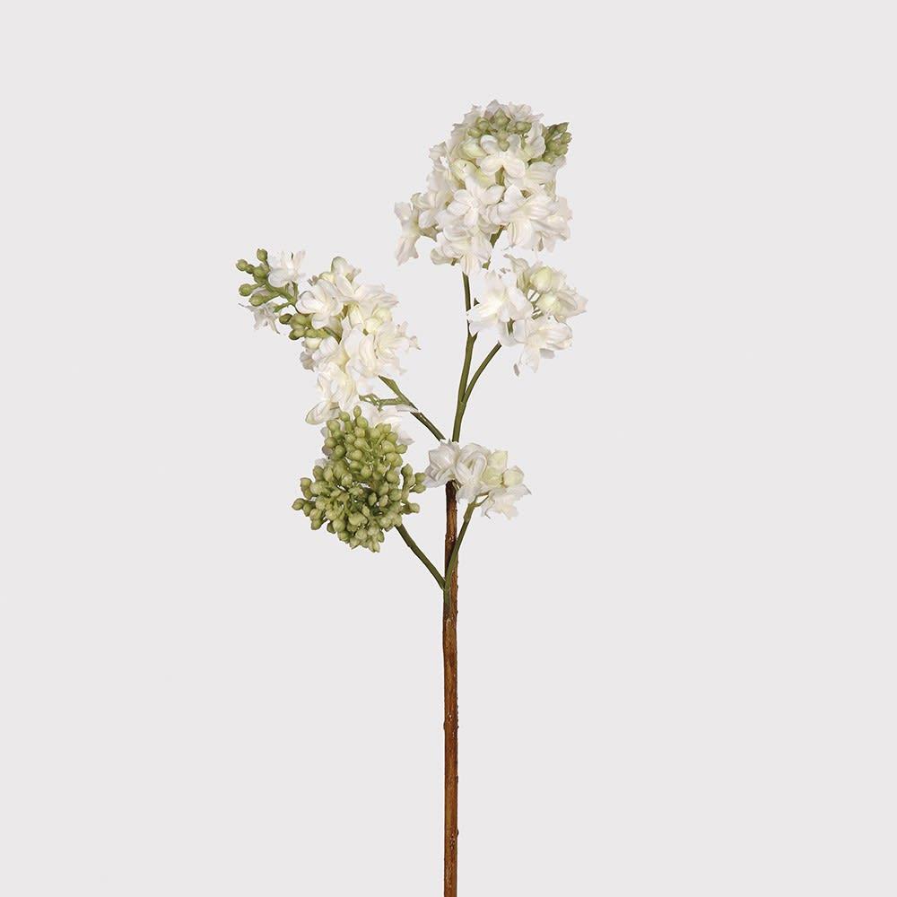 White lilac Spray