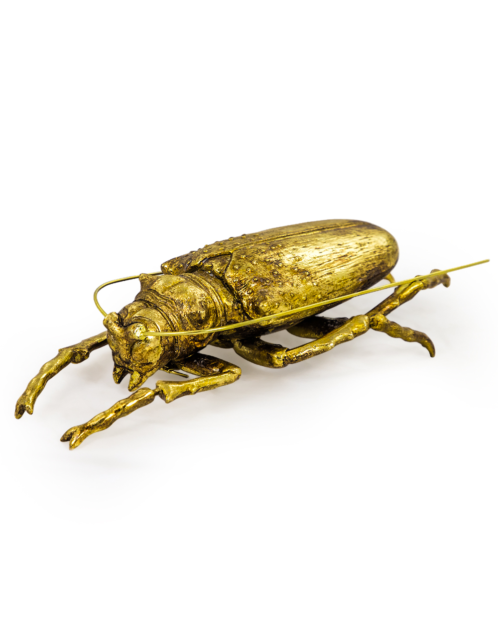 Gold Large Beetle with Antenna