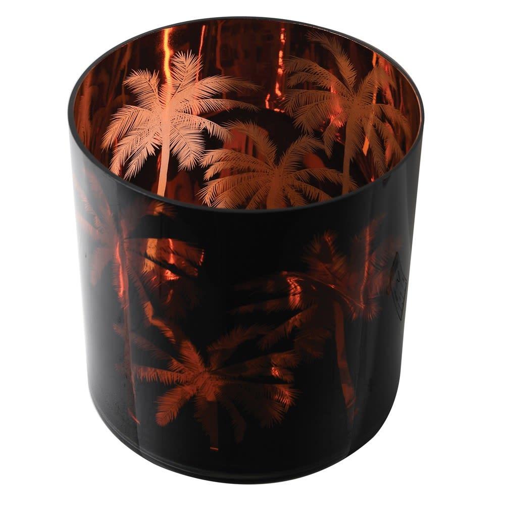 Hurricane Palm Tree