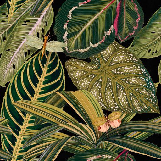 Amazonia Wallpaper