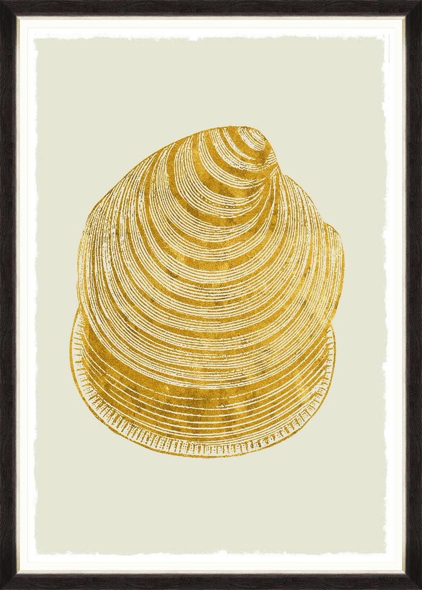 Golden Seashell Framed Print