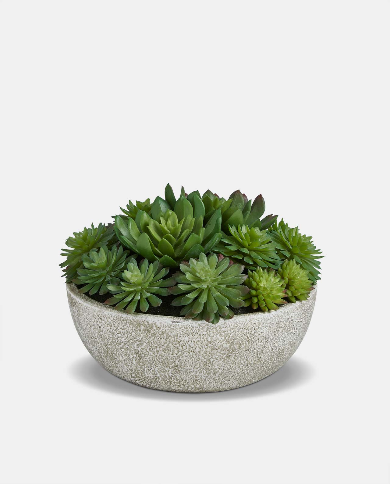 Mixed Echeveria Round Stone Pot