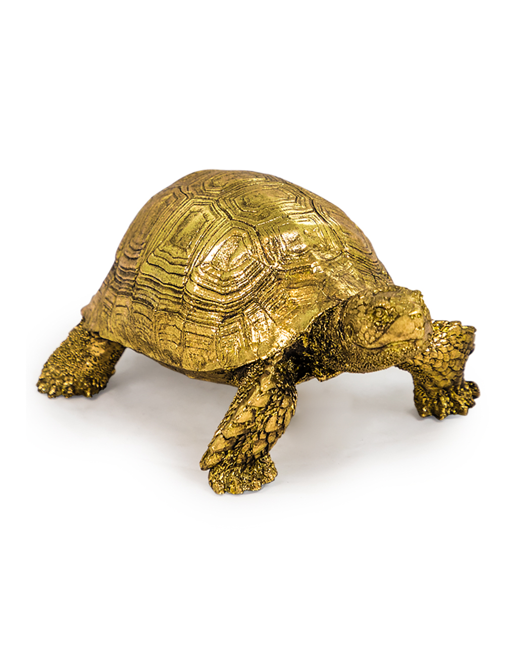 Small Gold Tortoise