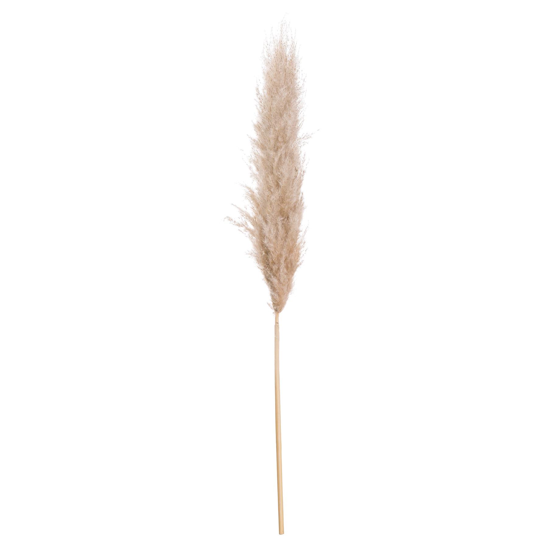 Butter Pampas Grass