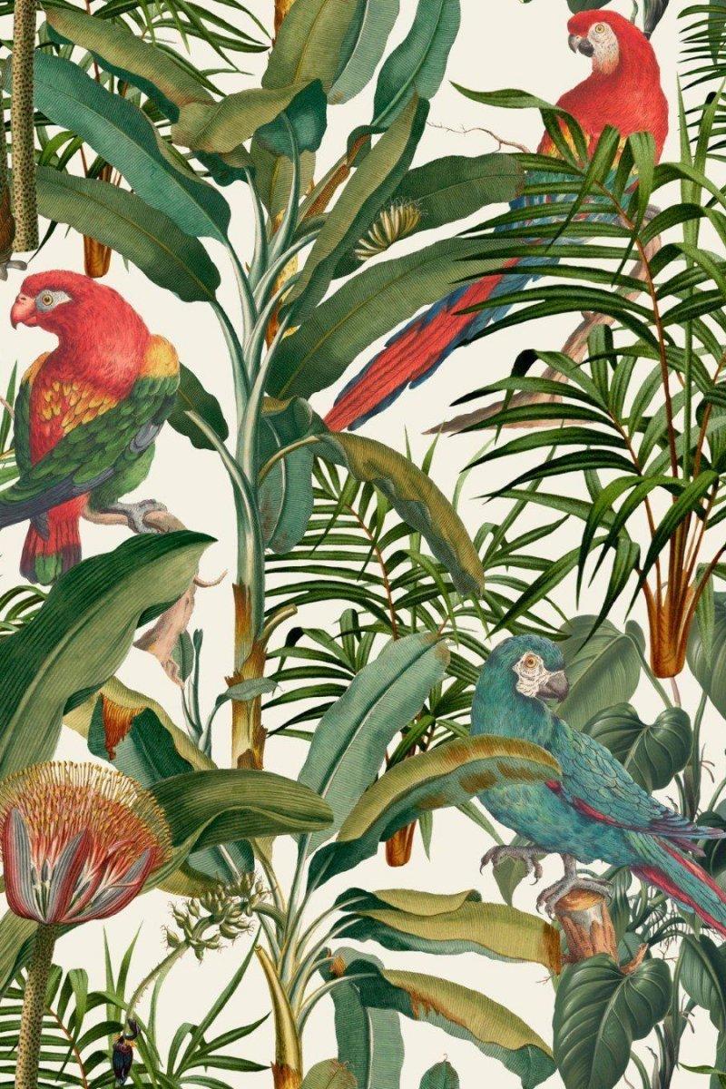 PARROTS OF BRASIL  Wallpaper