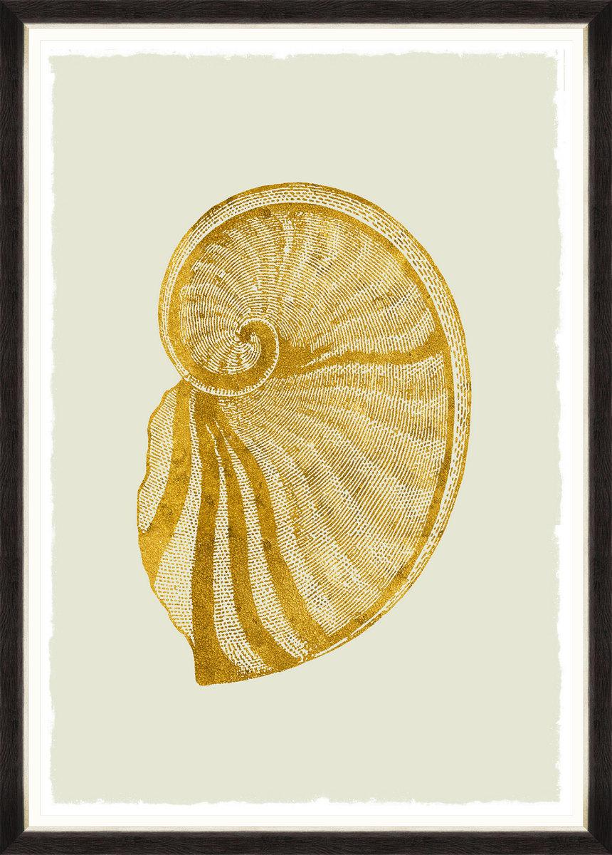 GOLDEN SEASHELL II Framed Print