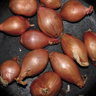 """Ty Segall - Fried Shallots [12"""" EP]"""
