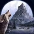 River Lake Huskies